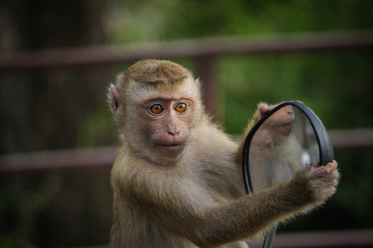 monkey catcher